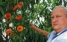Насолода смаком: вирощуємо продуктивні сорти персика та нектарина