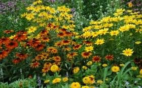 Рапсодія осені: квітники завершують сезон