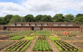 Самые необычные огороды мира: Лондон