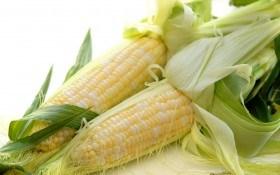 Как вырастить кукурузу рассадным способом