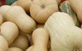 Зимові делікатеси: смакуємо мускатними гарбузами та ніжними кабачками