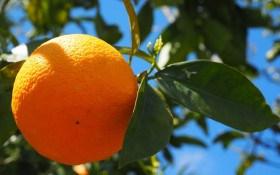 Апельсин: символ тепла, достатку і любові