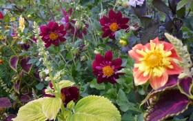 Стильна колекція – за сезон: як виростити багаторічники квітів з насіння