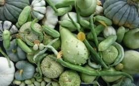 Баштан для флористів: декоративні види гарбуза та лагенарії