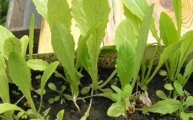 Спаржевий салат: свято для гурманів