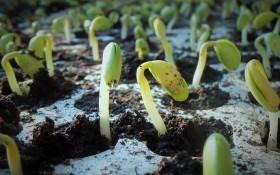 """Огородный """"арсенал"""": что нам нужно для выращивания рассады"""