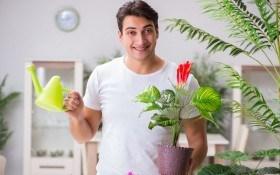 О поливе и подкормке экзотических растений