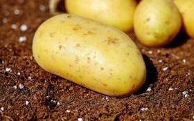 Тексіо Велум -  захист картоплі та овочів від шкідників та хвороб!