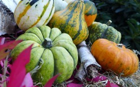 На будь-який колір і смак: вирощуємо гарбузи, кабачки та патисони