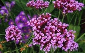 Цветники: что сеем в январе