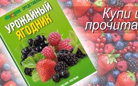 Урожайный ягодник