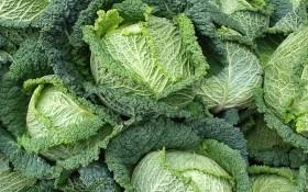 Пані у зеленому мереживі: особливості агротехніки савойської капусти