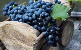 Хранение винограда в домашних условиях: личный опыт