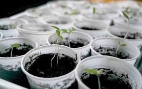 Минає рік, минає другий: визначаємо терміни зберігання насіння різних овочевих культур