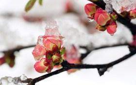 Як ефективно захистити рослини від приморозків