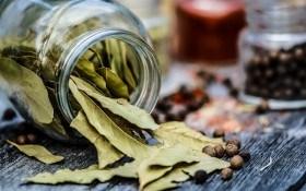 Реліктові прянощі: цілющі та харчові властивості лаврового листя