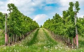 Без права на помилку: критерії для вибору найкращих саджанців плодових культур