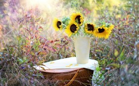 Октябрь: последние работы в цветниках