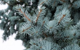 Пьянящий свежий аромат: хвойные в зимнем саду