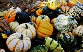 """Красені """"а-ля Фаберже"""": декоративні істівні види гарбуза на городі"""