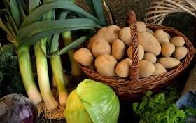 Хранение овощей в ноябре: день за днем