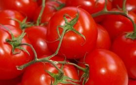 Від насіння – до врожаю: як домогтися рясного плодоношення на грядках