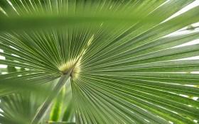 """Величні """"принци рослинного світу"""": особливості вирощування різних видів пальм"""