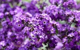 Фаворити квітника: рослини, що заслуговують на увагу
