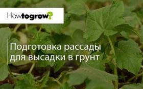Урок 7: підготовка розсади огірків до висадки у закритий ґрунт