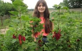 Чорне і червоне: особливості вирощування та вибір продуктивних сортів смородини