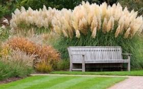 Стилистика цветников: как использовать растения-дымки в дизайне сада
