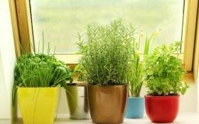Зимний кухонный садик — выращивание зелени в домашних условиях