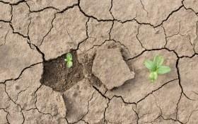 Как защитить растения от солнца и засухи: вода, мульча и... белая глина