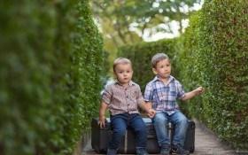 Живая изгородь — стильная деталь в дизайне сада