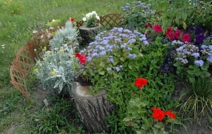 Зима : вибираємо насіння для майбутнього квітника