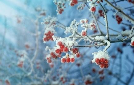 Лунный посевной календарь на декабрь 2017