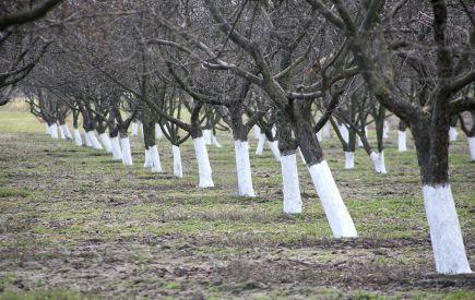 Работы в саду и огороде в марте во многом зависят и от погоды