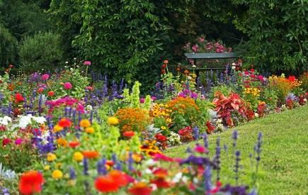 Як створити красивий квітник: вивчаємо основи ландшафтного стилю