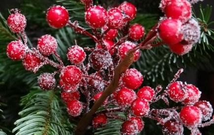 Рослини, що творять дива: флористичні повір'я, обряди та обереги на зимові свята