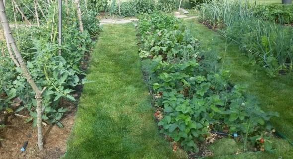 Трава в саду та на городі: досвід облаштування газону замість міжрядь
