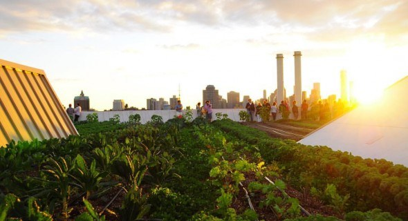 Ферма на крыше в Нью – Йорке