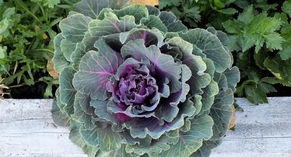 Сійте двічі: як отримати кілька врожаїв городини за сезон
