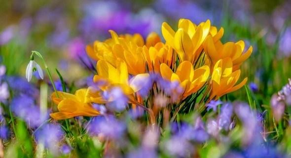 Бризки весняних барв: перші квіти сезону у дизайні саду