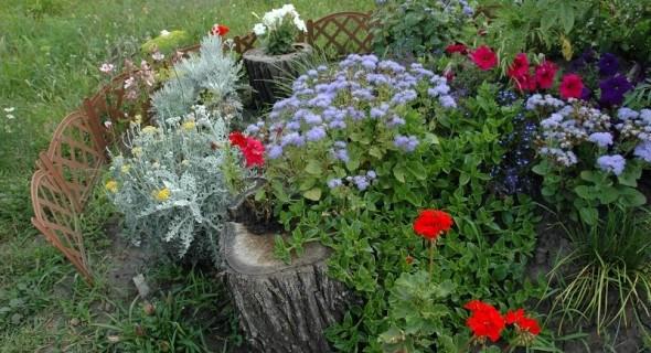Час планувати весну: вибираємо насіння для майбутнього квітника