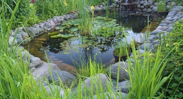 Декоративный водоем: выбираем и сажаем растения