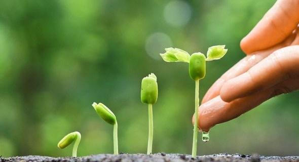 Внекорневая подкормка — дополнительное питание растений
