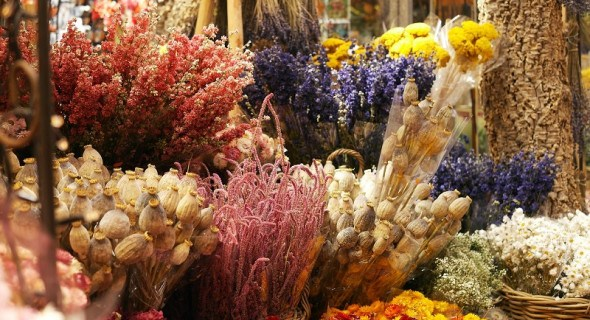 Колосяться трави дивовижні: гармонія злаків, квітучих та сухих