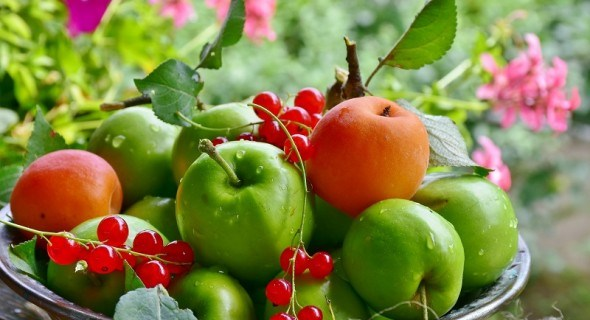 Август яблоками горд! Защитим урожай от болезней