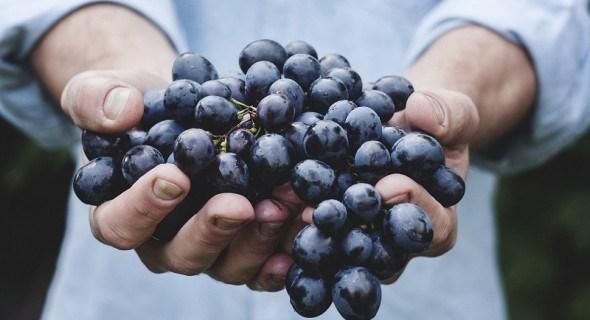 Захист виноградників на присадибних ділянках