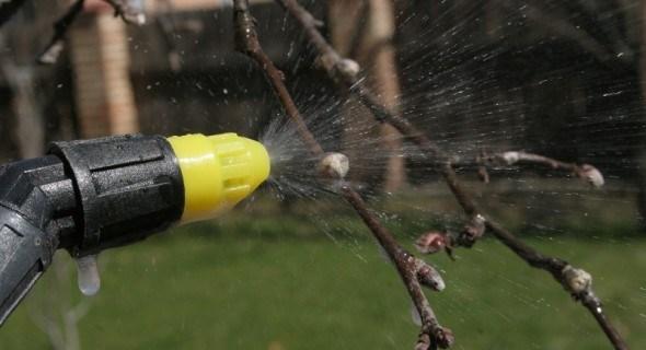 Профілактика краще за лікування: ранньовесняний захист плодових дерев